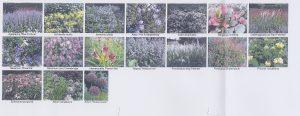 Omgevingsinrichting plantenvoorbeeld bewerkt